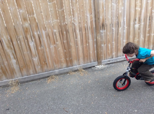 Oscar on bicycle