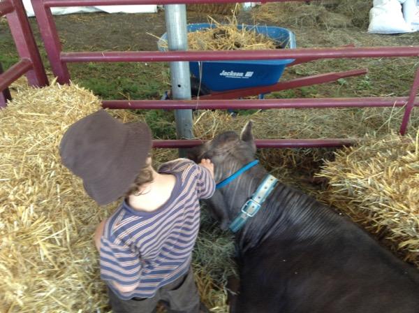 Oscar and cow