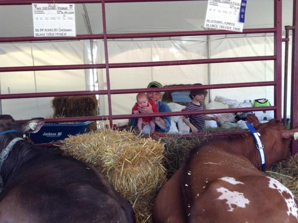 Ada, Dad and Oscar behind cows