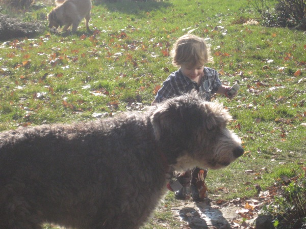 Oscar and a big shaggy dog in the garden